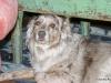 Laser-eyed dog