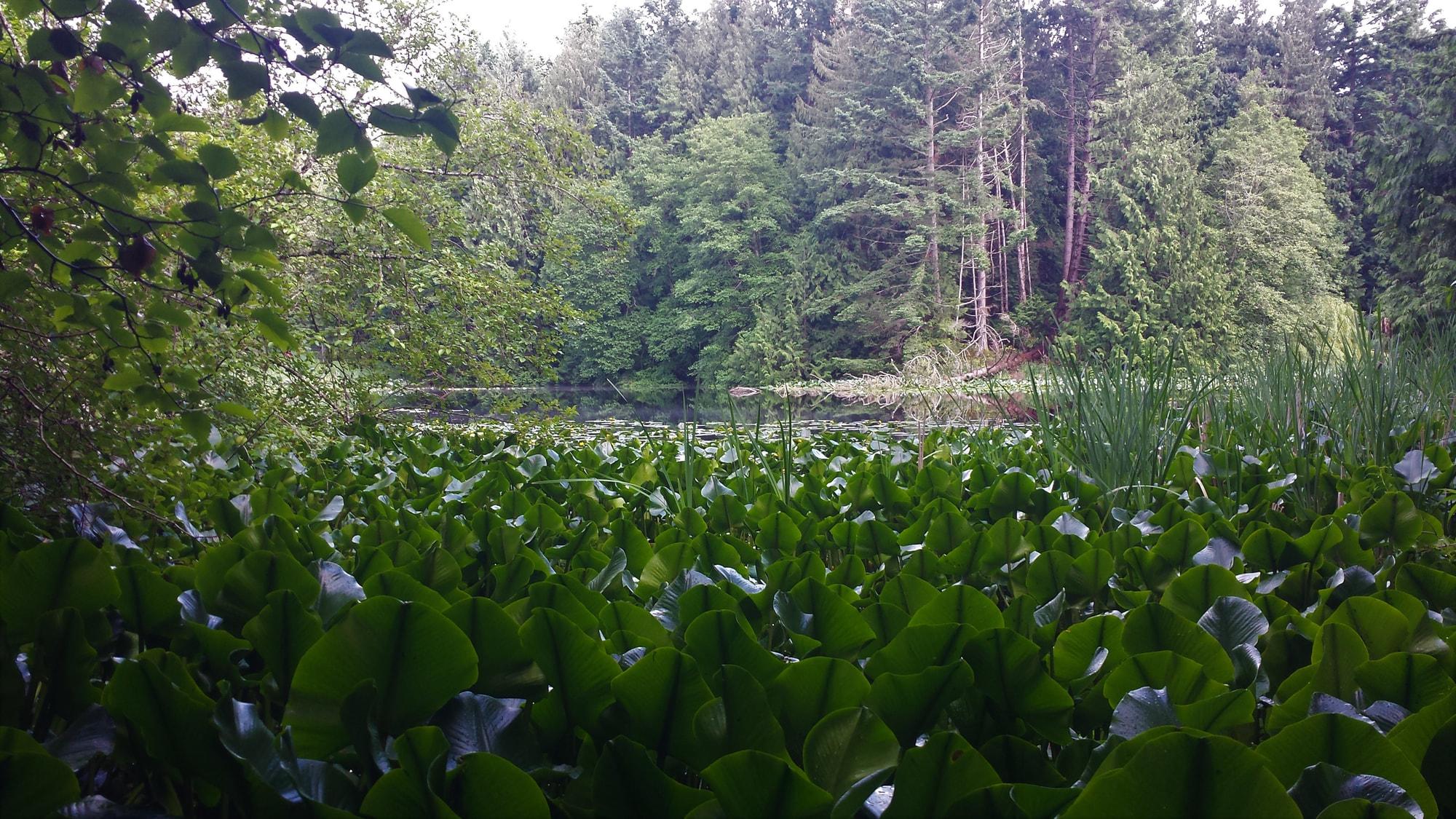 Gardom Pond